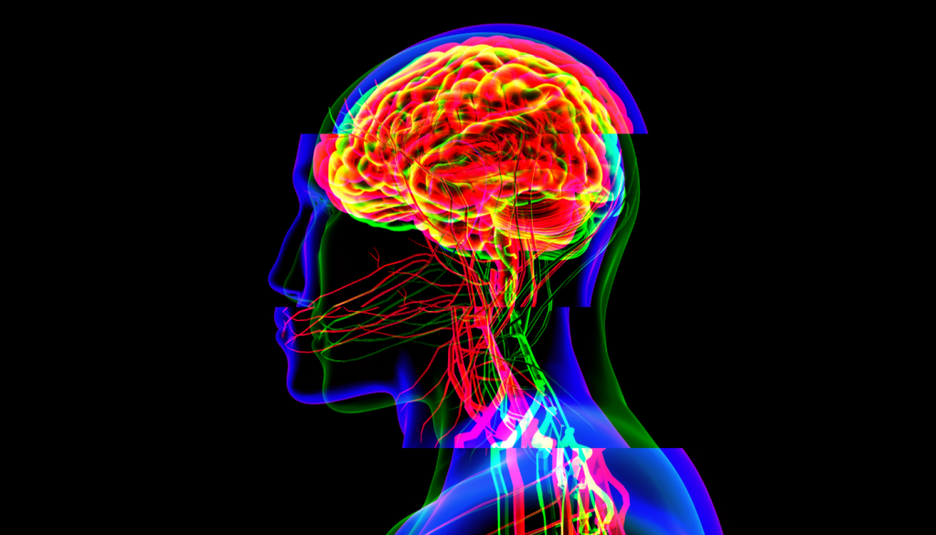 How Trauma Affects the body and the brain